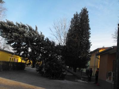 Stavanie Vianočného stromčeka [03.12.2016]
