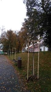 Výsadba stromčekov na námesti [11.10.2016]