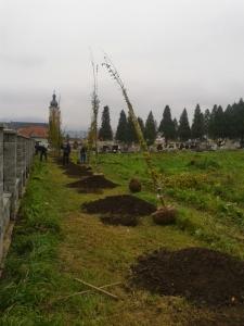 Výsadba stromov - cintorín [18.11.2014]