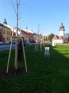Výsadba stromov - námestie [18.11.2014]