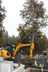 Zrezavánie nebezpečných stromov na cintoríne [02.06.2013]